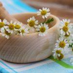 La phytothérapie : une solution pour traiter le cancer ?